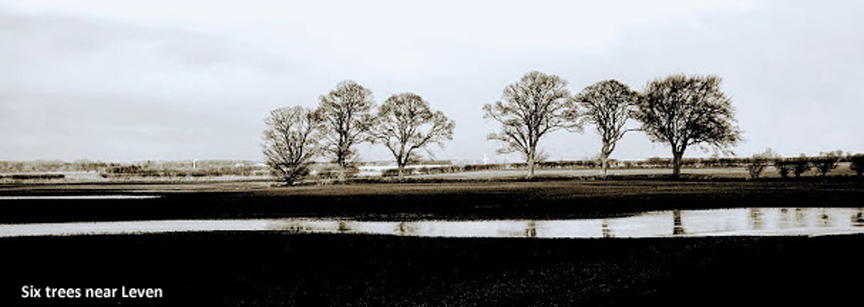 Six Trees near Leven/Photo © Arnold Underwood
