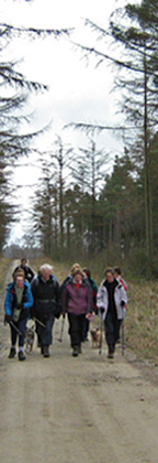 Striding through Cropton Forest/from a photo by Arnold Underwood/16th March 2008